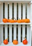Decorazione delle zucche di autunno Fotografie Stock