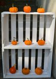 Decorazione delle zucche in scatole bianche Fotografia Stock