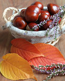 Decorazione di autunno fotografie stock libere da diritti
