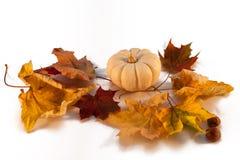 Decorazione di autunno dei fogli e della zucca Immagini Stock Libere da Diritti