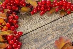 Decorazione di autunno del viburno rosso con le foglie fotografia stock
