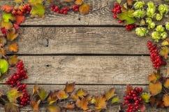 Decorazione di autunno del viburno rosso con le foglie fotografia stock libera da diritti