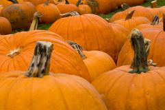 Decorazione di autunno - zona della zucca Immagini Stock