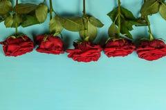 Decorazione di belle rose rosse su un fondo blu Fotografie Stock