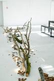 Decorazione di cerimonia nuziale La decorazione di legno sul pavimento L'albero sul pavimento La corteccia sul pavimento bianco D Fotografia Stock