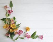 decorazione di fioritura di alstroemeria del fiore su di legno bianco Fotografia Stock