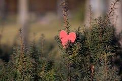 Decorazione di giorno di biglietti di S. Valentino e dei cuori in parco. Composizioni all'aperto. Fotografie Stock