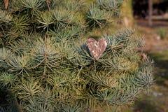 Decorazione di giorno di biglietti di S. Valentino e dei cuori in parco. Composizioni all'aperto. Immagini Stock Libere da Diritti