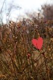 Decorazione di giorno di biglietti di S. Valentino e dei cuori in parco. Composizioni all'aperto. Immagine Stock