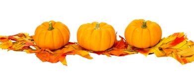 Decorazione di Halloween di ringraziamento di caduta isolata Fotografia Stock