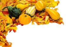 Decorazione di Halloween di ringraziamento di caduta isolata Immagini Stock Libere da Diritti