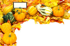Decorazione di Halloween di ringraziamento di caduta isolata fotografie stock libere da diritti