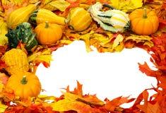 Decorazione di Halloween di ringraziamento di caduta isolata immagine stock