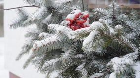 Decorazione di inverno dell'albero di abete archivi video