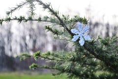 Decorazione di Natale del fiocco di neve all'aperto sul ramo sempreverde Fotografia Stock Libera da Diritti