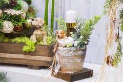 Decorazione di Natale: vaso con una candela dell'albero di Natale e un cane - simboli del nuovo anno immagini stock libere da diritti