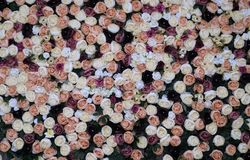 Decorazione di nozze, fondo di giardinaggio floreale con varietà di fotografia stock libera da diritti