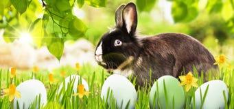 Decorazione di Pasqua con coniglio Immagini Stock Libere da Diritti