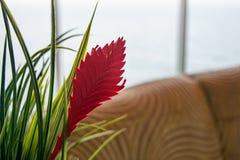 Decorazione domestica con la foglia e l'erba rosse in piantatrice fotografie stock libere da diritti