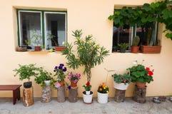 Decorazione domestica dei vasi da fiori Fotografia Stock