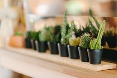 Decorazione domestica del cactus Fotografia Stock