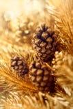Decorazione dorata di natale con i coni naturali Fotografia Stock