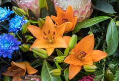 Decorazione floristica di bellezza con i fiori tropicali variopinti fotografia stock libera da diritti