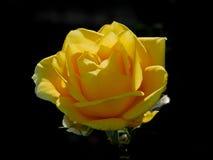 Decorazione gialla Fotografia Stock