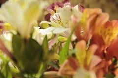 Decorazione gialla della fioritura del primo piano del mazzo di alstroemeria Immagini Stock Libere da Diritti