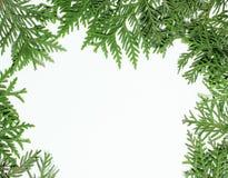 Decorazione mai verde dell'albero di abete per la cartolina di Natale, modello del nuovo anno, bianco del copyspace immagini stock