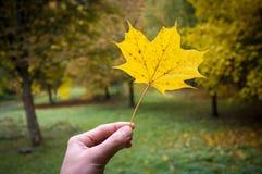Decorazione naturale di autunno Fotografia Stock
