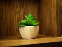 Decorazione succulente artificiale verde della casa della pianta fotografia stock