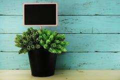 Decorazione succulente artificiale verde della casa della pianta sugli scaffali di legno fotografia stock libera da diritti