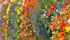Decorazione variopinta dei fiori selvaggi Fotografie Stock