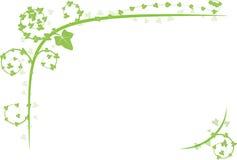 Decorazione verde dell'edera Immagine Stock Libera da Diritti