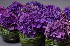 Decorazione viola dell'ortensia del fiore con erba Fotografie Stock Libere da Diritti