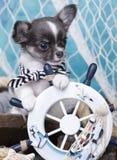 Decorazioni del cucciolo e del mare della chihuahua Fotografia Stock Libera da Diritti
