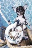 Decorazioni del cucciolo e del mare della chihuahua Fotografia Stock