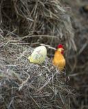 Decorazioni della Camera di Pasqua Fotografie Stock Libere da Diritti