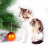 Decorazioni di Natale e del gattino Fotografia Stock