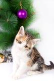 Decorazioni di Natale e del gattino Immagini Stock Libere da Diritti