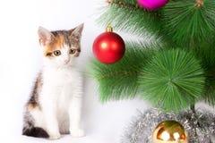 Decorazioni di Natale e del gattino Immagini Stock