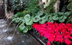 Decorazioni di Natale nelle serre dei giardini di Longwood Fotografia Stock Libera da Diritti