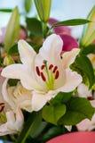 Decorazioni floreali Fotografia Stock Libera da Diritti