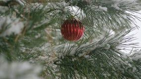 Decorazioni rosse di Natale con i rami del pino video d archivio