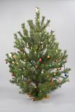 Decoreted Christmas tree. Christmas pine tree with decorations Stock Images