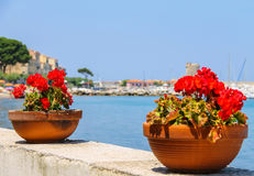 Decortive pots with flowers on the waterfront on Elba Island Royalty Free Stock Image
