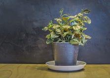 Decotate plants Royalty Free Stock Photos