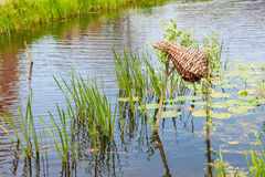 Decoy. In ditch with nature water plants royalty free stock image