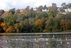 Decoy country park. Autumn colours at Decoy park royalty free stock image